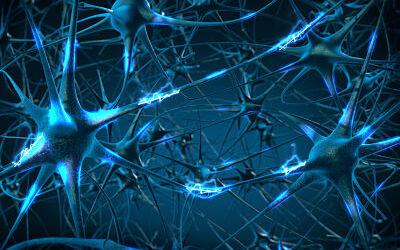 Para qué sirven las neuronas espejo