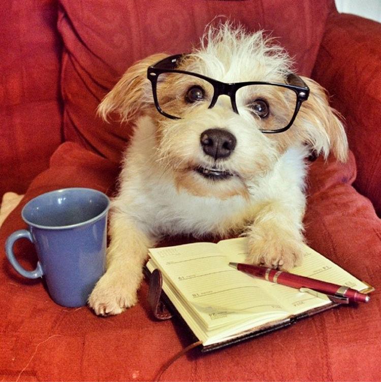 ¿Nuestro perro en el trabajo?/OUR DOG AT WORK